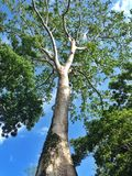 Big tree. Under the sky stock photo