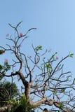 The big tree under sky. In summer the sun light Stock Photos