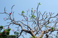 The big tree under sky. Royalty Free Stock Photos
