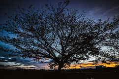 Big tree under sunset Stock Images