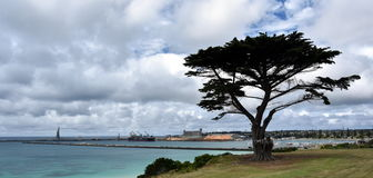 Big tree in the Vested Land Park. Portland beach, Lee breakwater and harbour in the background on a cloudy day stock photos