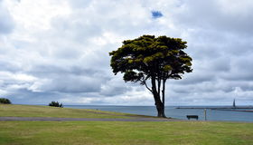 Big tree in the Vested Land Park. Portland Lee breakwater and harbour in the background on a cloudy day royalty free stock photo