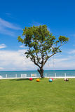 A big tree view in the blue sky day. A big tree view in the blue sky day is so beautiful at thailand Stock Photography
