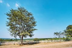 Big tree and white fence of ranch farmhouse idyllic rural scenery landscape. Big tree and white fence and ranch farmhouse Idyllic rural scenery landscape in royalty free stock images