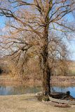 Big tree willow at the pond. Spring day; a backyard pond in the countryside and a tree in the front wooden fence royalty free stock photos