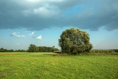 Big tree - willow tree growing on meadow. And gray clouds on blue sky royalty free stock photo
