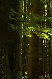 Big trees and brances in a dense forest Stock Photo