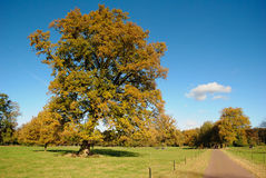 Big trees in Dutch landscape. Big trees and road in Dutch landscape royalty free stock image
