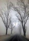 Big trees in the fog. In the winter day Stock Photos