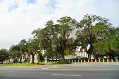 Big trees in front of Florida State Capitol Royalty Free Stock Photos