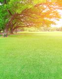 Big trees in the garden with green lawn Royalty Free Stock Photo