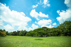 Big trees Royalty Free Stock Images