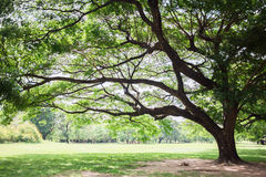 Big trees Royalty Free Stock Photo