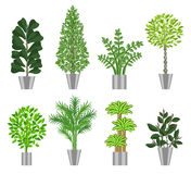 Big trees house plants collection. Vector illustration. Big trees house plants collection. Large houseplants in pots for decoration of interiors. Vector Royalty Free Stock Photo