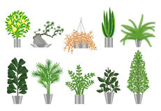 Big trees house plants collection. Vector illustration Stock Photography