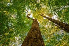 The Big Trees of Joyce Kilmer Memorial royalty free stock image