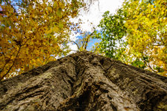 The Big Trees of Joyce Kilmer Memorial Royalty Free Stock Photography