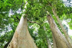 Trees in nature royalty free stock images