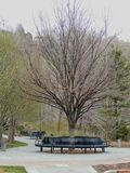 Park Benches and pathways in Memory Grove Park in Salt Lake City Utah along the Wasatch Front Rocky Mountains in early spring. Big Trees with Park Benches and Royalty Free Stock Photos