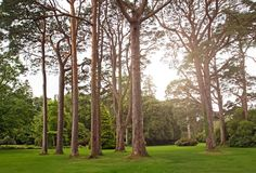 Big trees in a park with green lawn. Toned photo Royalty Free Stock Images
