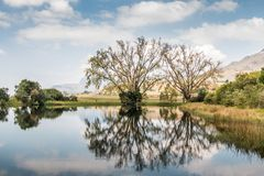 Big trees reflecting in water with cloudy skies. Nature landscape in the Royal Natal National Park, South africa Royalty Free Stock Images