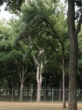 Big Trees!. Rest on the park, feeling peace under the big trees on cloudy afternoon royalty free stock photo