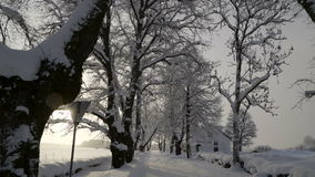 Big trees on the side of the Palmse manor. Covered with thick white snow in the winter season stock video