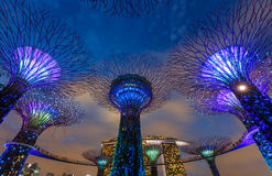 Big trees, Singapore. Big trees night scene at Singapore stock photography