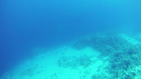 Big Tropical Fish on Coral Reefs Underwater in the Red Sea. Egypt. stock video footage