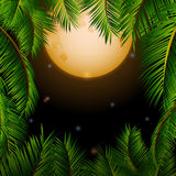Big tropical moon and palm trees background Stock Photos