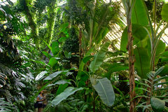 Big tropical plants in the old Atocha railway train station in Madrid Stock Image