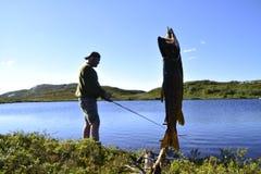 Big trout stock photos