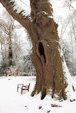 Big trunk in the snow Royalty Free Stock Images
