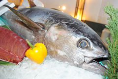 Big tuna on ice Stock Image
