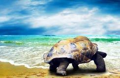 Big Turtle Stock Photos