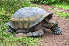 Big turtle Royalty Free Stock Image