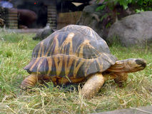 Big Turtle. In Moscow Zoo Royalty Free Stock Image