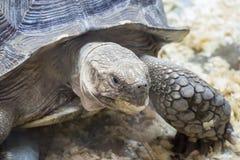 Big turtle closeup Stock Photo
