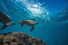 Big turtle in coral reef underwater shot stock photo
