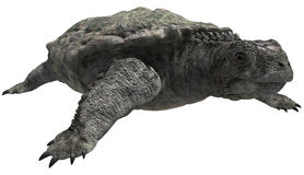 Big turtle. 3D render of a big turtle Royalty Free Stock Images