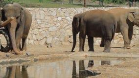 Big turtle eating in the safari stock footage