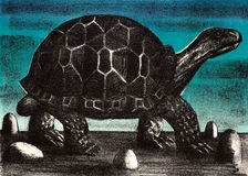 Big turtle Royalty Free Stock Photo