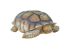 Big turtle isolated on white background, clipping path royalty free stock photography