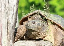 Big turtle Stock Photo