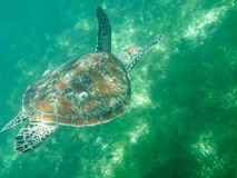 The Big Turtle Stock Images