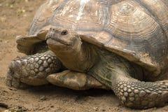 Big turtle portrait Stock Photo