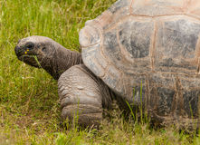 Big Turtle Royalty Free Stock Photos