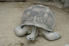 the old turtle in japan stock photo