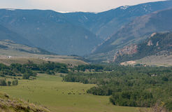 Big Valley in the foothills of Montana. Big valley with cattle at the foot of the Rocky Mountains in Montana. Beautiful mountain valley with trees Royalty Free Stock Image