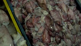 Big variety of seafood. Squids lie on market place counters. Vietnam. On this video you can see market place on streets of Vietnam. A large number is fresher stock footage